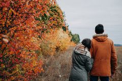 Young couple walks in autumn forest among colorful trees Stock Image