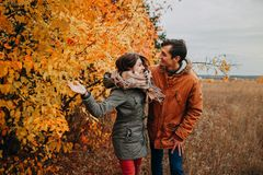 Young couple walks in autumn forest among colorful trees royalty free stock photo