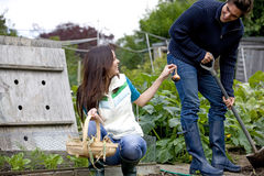 A young couple working on an allotment together Royalty Free Stock Photos