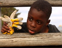 Young cowboy on fence. A boy looking through a farm rail fence, holding work gloves stock photo
