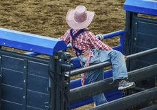 Young cowboy watching rodeo Cody Wyoming stock photo