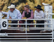 Young Cowboys. Watch the action at the Scott Valley Pleasure Park Rodeo in Etna, California royalty free stock image