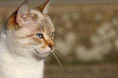 Cute cat face royalty free stock images