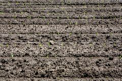 Young crop on freshly plowed land stock images
