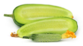 Young cucumber Royalty Free Stock Image