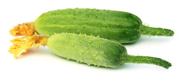 Young cucumber Stock Photography