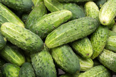 Young cucumbers Stock Photography