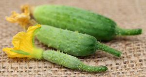 Young cucumbers Royalty Free Stock Photos