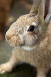 Young curious bunny Stock Image