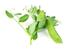 Young cut green pea Royalty Free Stock Photos