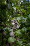 Young cute cat climbing the tree. Young cute cat climbing the tree in the garden. Domestic cat, natural light Royalty Free Stock Photo