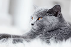 Young cute cat close-up portrait. Stock Images
