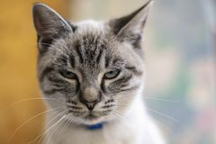 Young, cute cat close-up portrait photo royalty free stock images