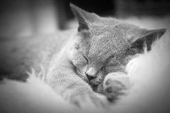 Young cute cat resting on white fur Stock Photo