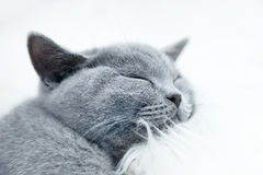 Young cute cat resting on white fur Stock Photography