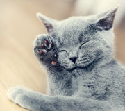 Young cute cat washing his fur. Stock Images