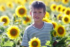Young cute child boy with sunflower stock image