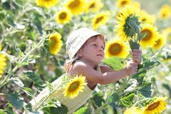Young cute child with sunflower Royalty Free Stock Photography