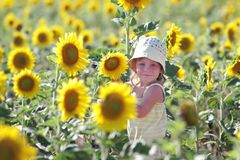 Young cute child with sunflower Stock Photography
