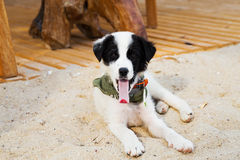Young cute dog gaped on the beach Royalty Free Stock Photos