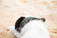 Young cute dog lying on the beach Royalty Free Stock Photo