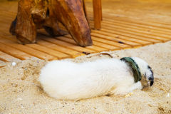 Young cute dog lying on the beach Stock Photos