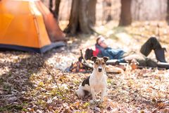 Young cute dog is resting in the woods near the bonfire. Man in the background royalty free stock image