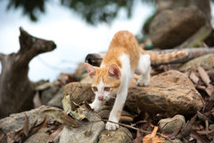 Young cute kitty cat walking on the rock. Stock Photos