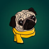 Young cute pug puppy in a yellow scarf Stock Image
