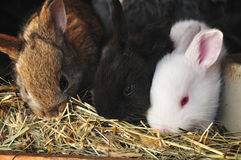 Young cute rabbits Stock Images