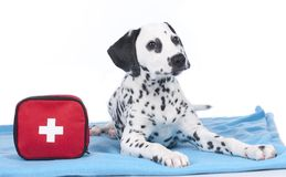 Young dalmatian beside first aid kit Stock Photos