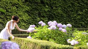 Young dame and hydrangeas stock video