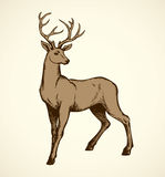 Young deer antlered. Vector drawing Royalty Free Stock Photography