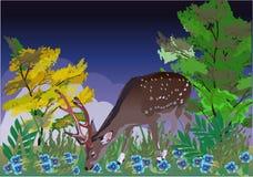 Young deer between blue flowers Stock Photography
