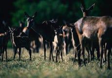 Young deer between herd standing together in sunlight. stock photo