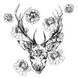 A young deer with horny horns on which peonies are planted. Illustration. Design a tattoo, a symbol of mystical magic. For your use Royalty Free Stock Photography