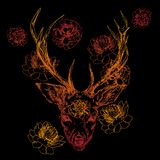 A young deer with horny horns on which peonies are planted. Illustration. Design a tattoo, a symbol of mystical magic. For your use Royalty Free Stock Photos