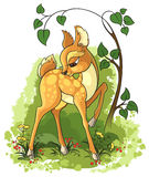 Young deer on the summer glade stock illustration