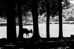 Young deer among trees in Nara Park Stock Photo