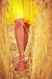 Young delicate woman's feet walking through summer wheat field Stock Photos