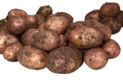 Young dirty potatoes. Royalty Free Stock Photography