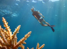 Young diver pops up from the depths Royalty Free Stock Photography
