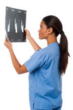Young doctor looking at scanned x-ray report Royalty Free Stock Photography