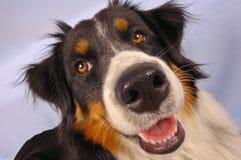 Young dog stock photos