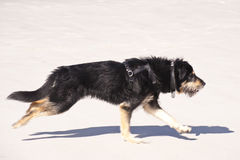 Young Dog Stock Images