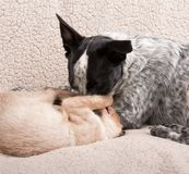 Young dog and cat play fighting Stock Photos