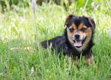 Young dog outdoors on green summer grass background. Young active dog outdoors on green summer grass background stock photos