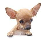 Young dog. stock photos