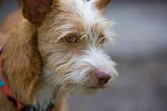 The young dog. Portriat photography stock images