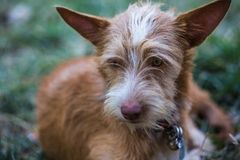 The young dog. Portriat photography royalty free stock images